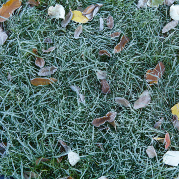 Dormancy in Your Spirit (and in Your Yard)